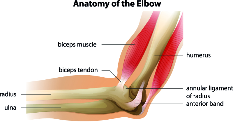 Elbow joint - Joints health