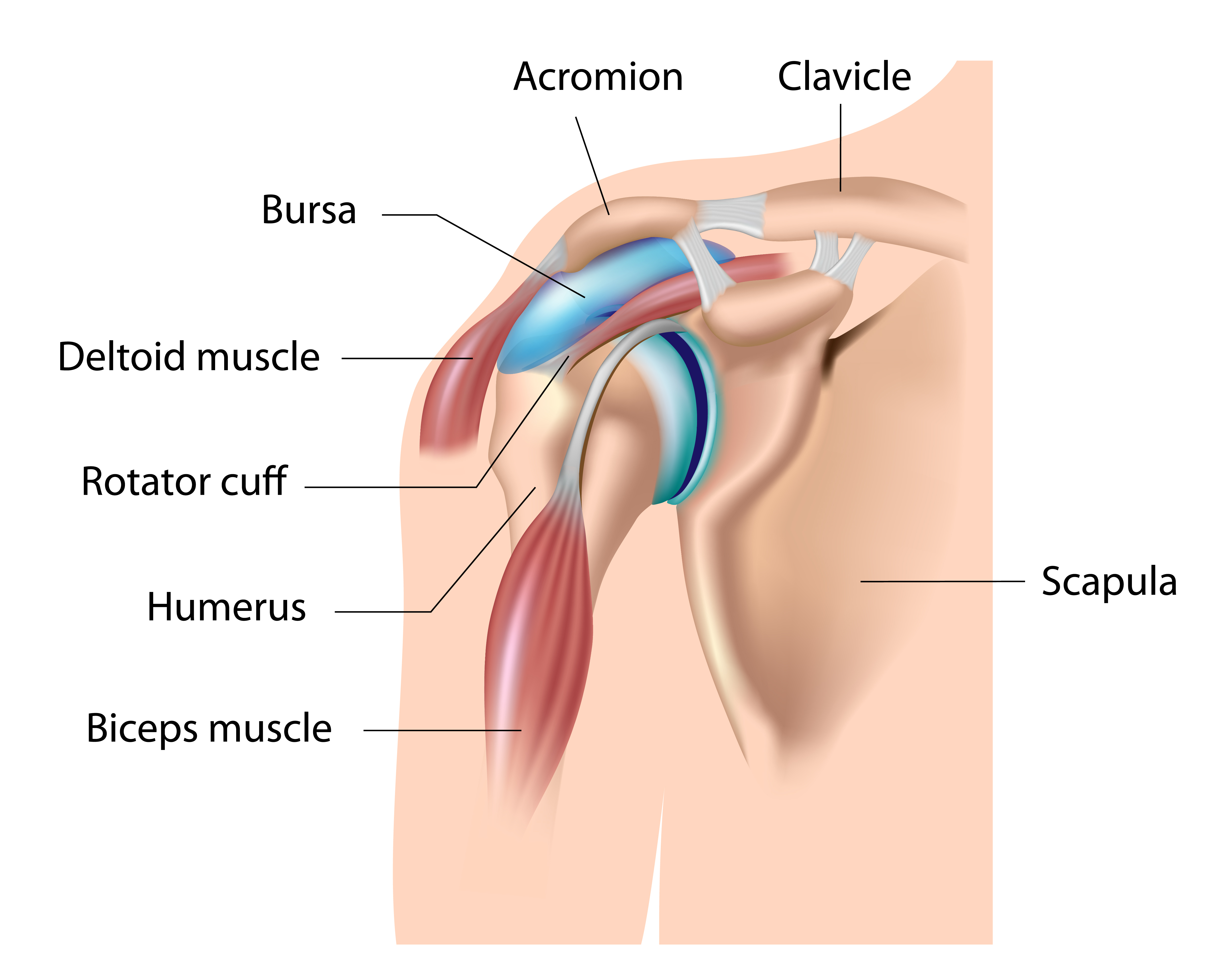 Construction of shoulder joint