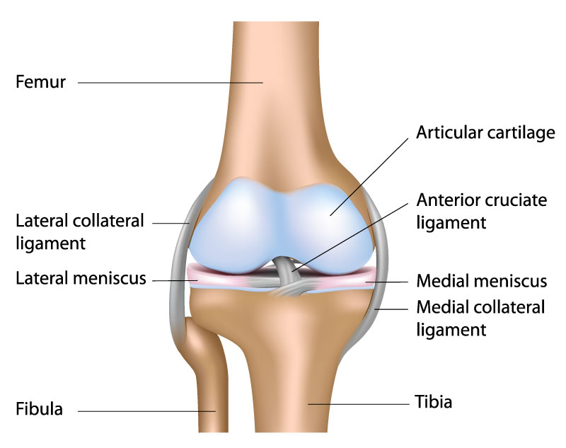 Construction of the knee